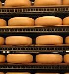 Hogyan készül a sajt?
